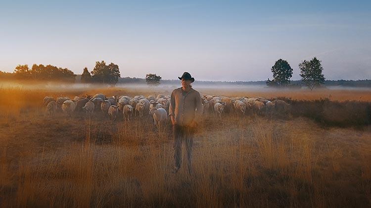 Sheephero